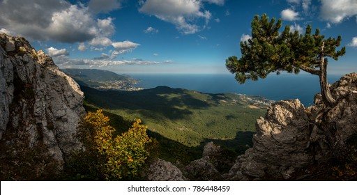 Beauty nature landscape Crimea with tree - pine, horizontal photo
