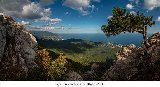 Beauty nature landscape Crimea with tree - pine, horizontal photo