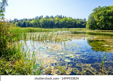 Beauty nature landscape with forest lake