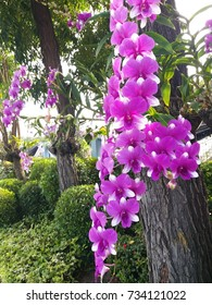 The beauty of the orchid. Pink in the rainy season