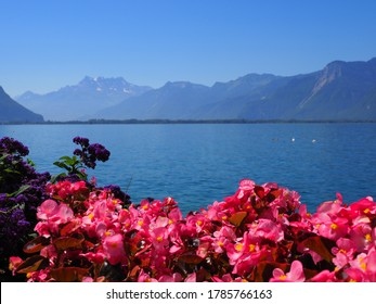 Beauty reddish flowers at promenade in european Montreux city at Lake Geneva in canton Vaud in Switzerland, clear blue sky in 2017 warm sunny summer day on July.