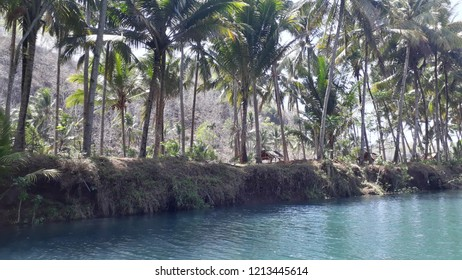 Beauty river and coconut forest
