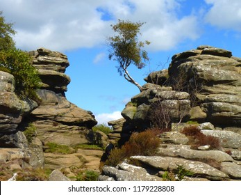 Beauty in Rocks (& the adaptability of nature)