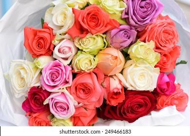 Rose Flower Colours