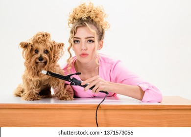 Beauty salon for animals. Dog salon. Grooming. Grooming master making dog hairstyle. Pet grooming. Animal clinic. Vet. Pet salon. Petshop.