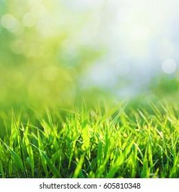 Beauty seasonal backgrounds with green summer foliage and beautiful bokeh