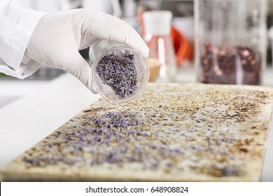 Beauty, skincare, cosmetology and innovations. Scientist formulating chemical for cosmetics or medicine. Factory worker using flowers samples for making natural organic soap. Selective focus on hand