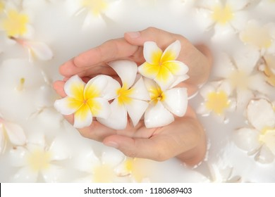 Beauty spa and wellness treathment with white flower petals in bath with milk