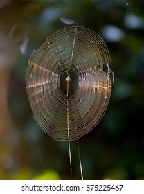 beauty spider cobweb