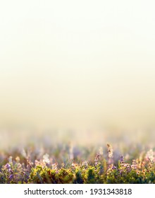 beauty spring concept, wild flowers and grass closeup, vertical photo with empty space for text