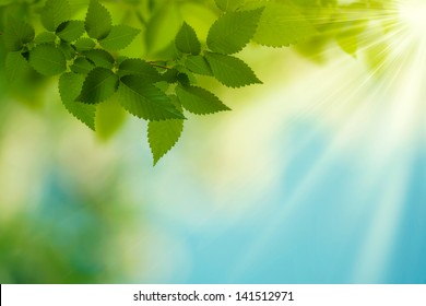 Beauty Summer Day. Abstract environmental backgrounds for your design