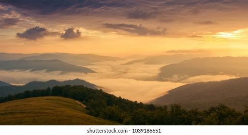 beauty summer mist image, picturesque view of evening sunset on background gold sunlight,  valley coverd of fog under fantastic morning sky, Europe, Carpathia, Ukraine