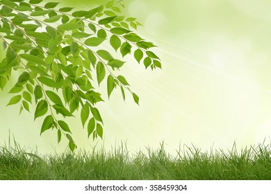 Beauty sunny day in the forest, abstract natural backgrounds