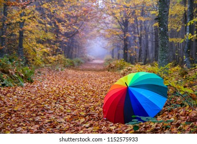 The beauty that autumn brings to nature. Domanic, Kutahya, Bursa, Turkey