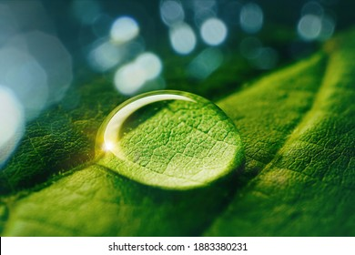 Beauty transparent drop of water on a green leaf macro with sun glare. Beautiful artistic image of environment nature in spring or summer.