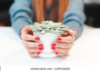 Beauty treatment photo of nice manicured woman fingernails. Very nice feminine nail art with nice red polish. Flowerpot succulent in hands.