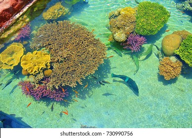 The beauty of the underwater world. Corals of Eilat. Israel