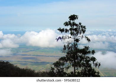 The beauty of the view on the mountain so it can see the clouds and the sea as well as views of the rice fields.