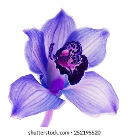 Beauty violet orchid flower on white