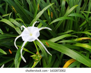 Beauty white flower blossom in green leaf
