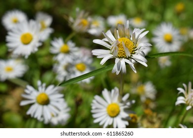 the beauty of white flowers