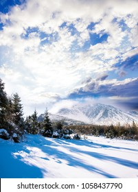 Beauty winter world
