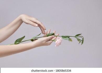 Beauty woman with pink flowers in her hand. Natural cosmetic for hand skin care. Hand hydration and anti-wrinkle and anti-aging treatment