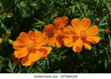 beautyful color flower