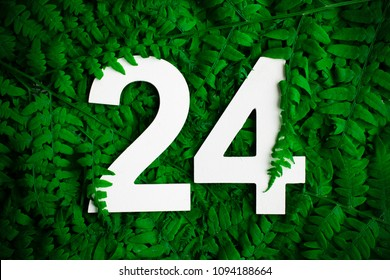 Beautyful ferns leaves green foliage natural background. Midsummer background with twenty four numbers
