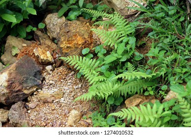 Beautyful ferns leaves green foliage natural floral fern background on the ground with rocks