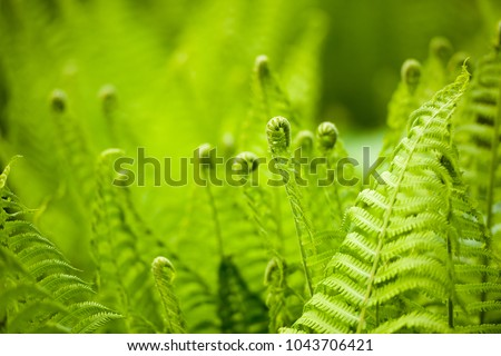 Beautyful ferns leaves green