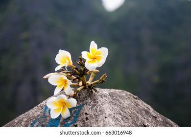 beautyful flowers in Hang Mua (Mua Cave) in NinhBinh, VietNam