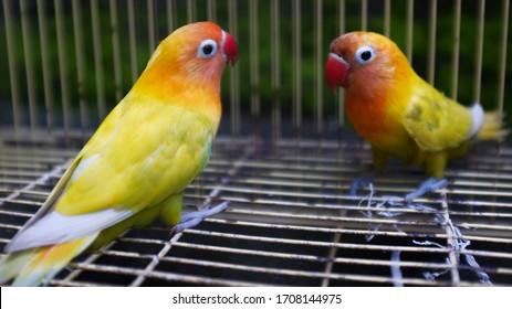 Lovebirds Images Stock Photos Vectors Shutterstock