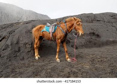 Beautyful Horse on Broma mountain