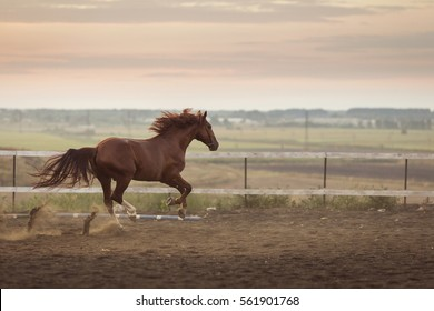 beautyful horse running in the stable