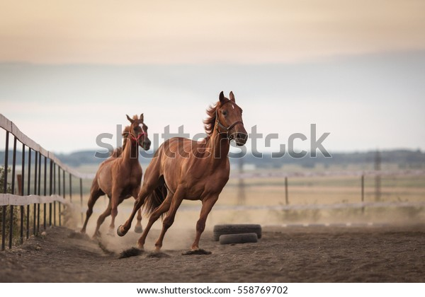 running stable