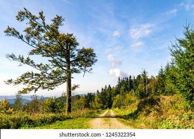 Beautyful lane in Blackforest Landscape in Summertime