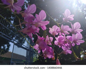 beautyfull pink flowers and light