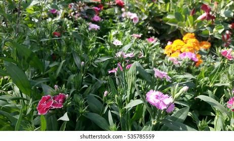 beautyfull plants flowers