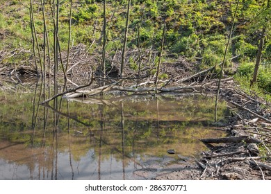 The beaver barrage on the creek in forest of Little Carpathian - Slovakia