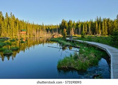 Beaver Boardwalk, Hinton, Alberta, Canada