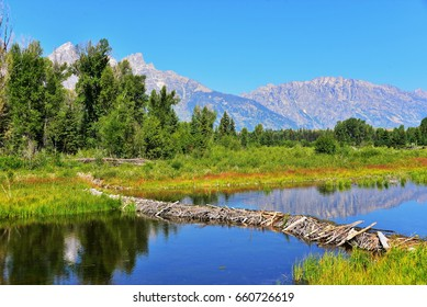 Beaver Dam in front of the teton mountain range