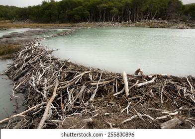 Beaver Dam - Tierra Del Fuego - Argentina