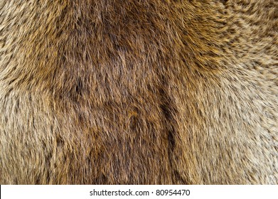 A beaver pelt