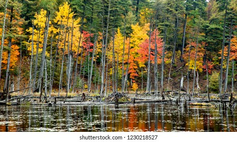 Beaver Pond in the Adirondack Mountains of New York