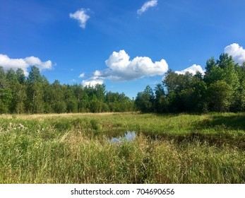 Beaver Pond in the Middle of the Woods - Northern Minnesota Summer Day