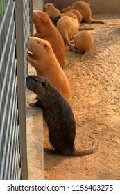 Beavers in the zoo