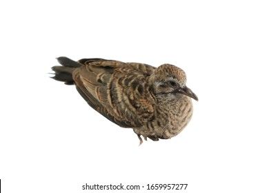 beby bird isolated on white background and clipping path.
