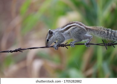 A beby of squirrel moving to words for finding food early in the morning