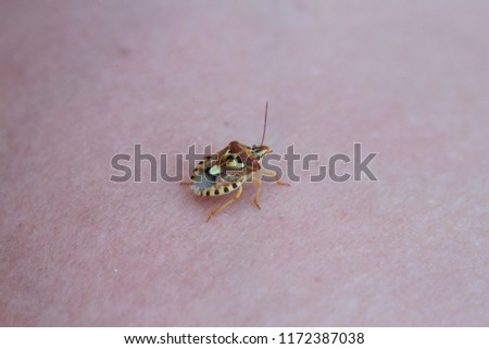 Bed Bug On White Skin Stock Photo Edit Now 1172387038 Shutterstock